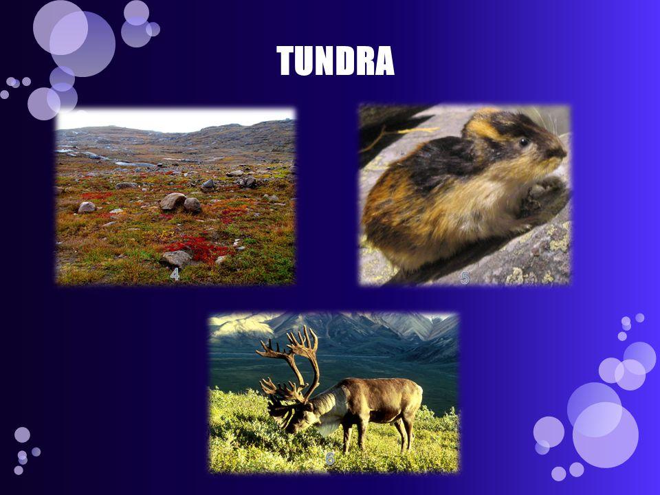 TUNDRA 4 5 6