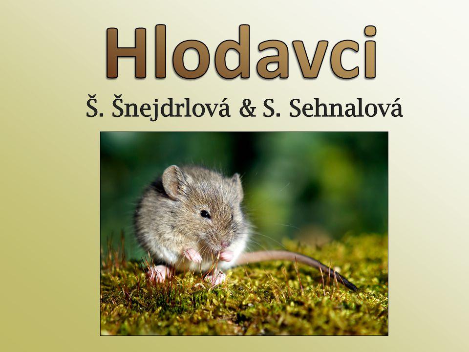 Š. Šnejdrlová & S. Sehnalová
