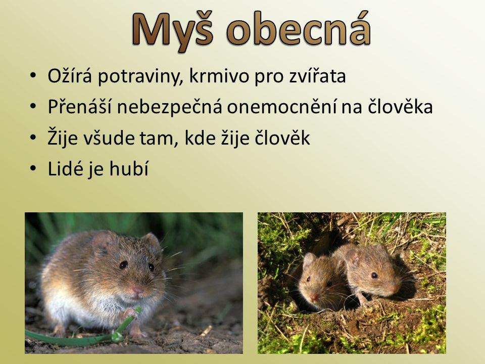 Myš obecná Ožírá potraviny, krmivo pro zvířata
