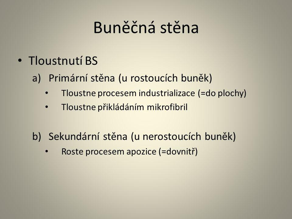 Buněčná stěna Tloustnutí BS Primární stěna (u rostoucích buněk)