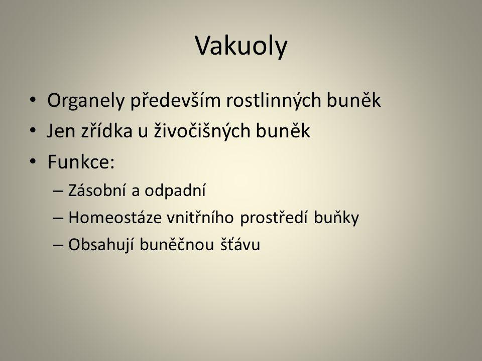 Vakuoly Organely především rostlinných buněk
