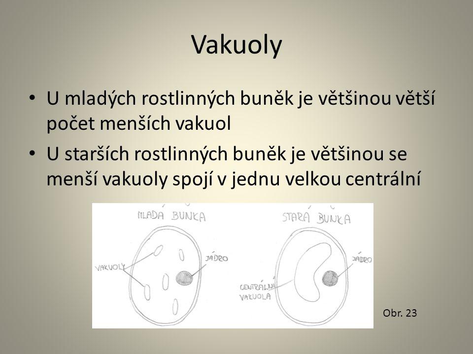Vakuoly U mladých rostlinných buněk je většinou větší počet menších vakuol.