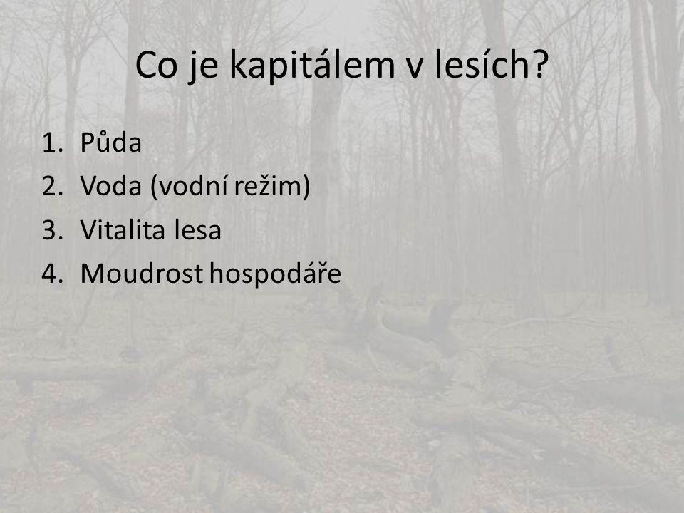 Co je kapitálem v lesích