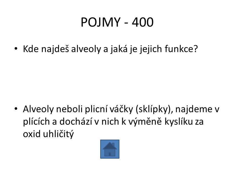 POJMY - 400 Kde najdeš alveoly a jaká je jejich funkce
