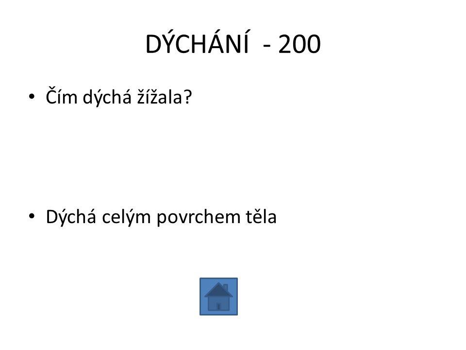 DÝCHÁNÍ - 200 Čím dýchá žížala Dýchá celým povrchem těla