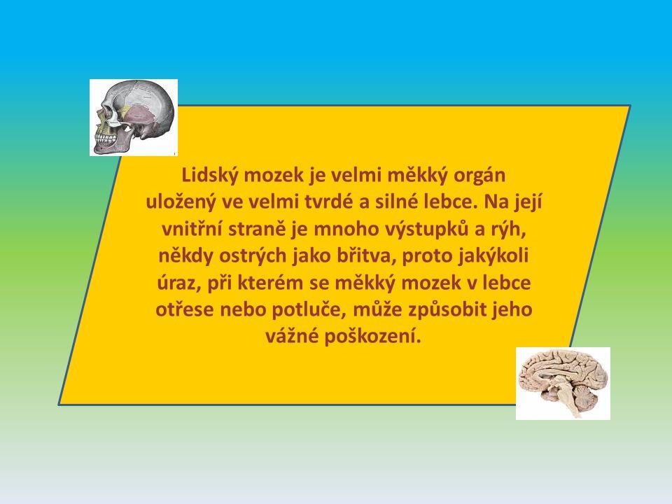 Lidský mozek je velmi měkký orgán uložený ve velmi tvrdé a silné lebce