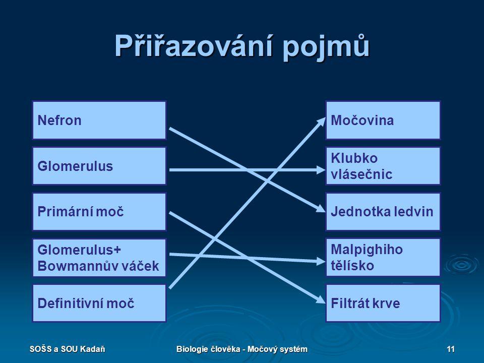 Biologie člověka - Močový systém