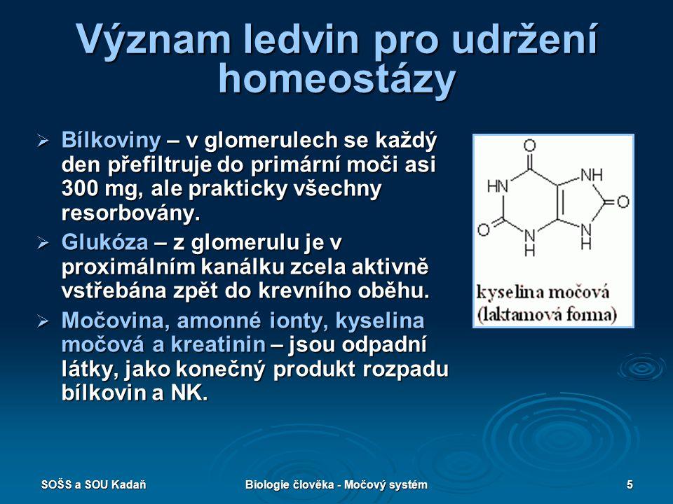 Význam ledvin pro udržení homeostázy