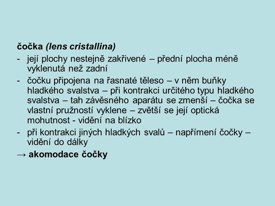 čočka (lens cristallina)