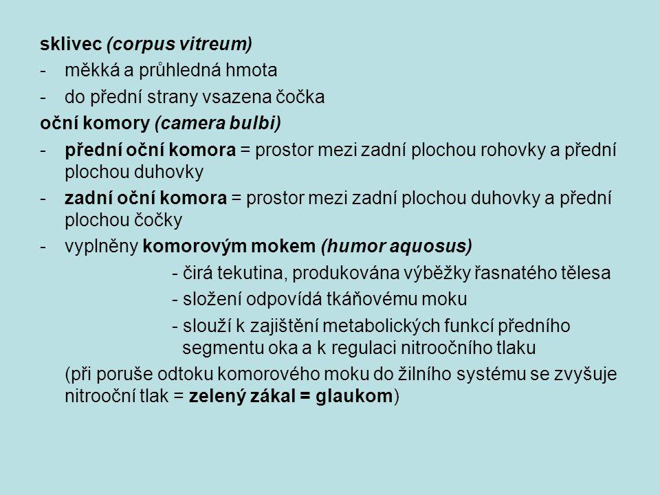 sklivec (corpus vitreum)