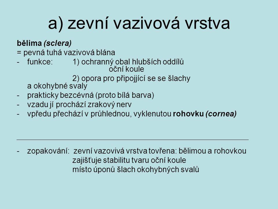 a) zevní vazivová vrstva