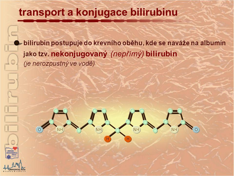 transport a konjugace bilirubinu