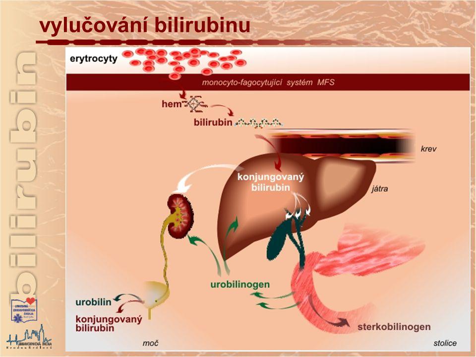 vylučování bilirubinu