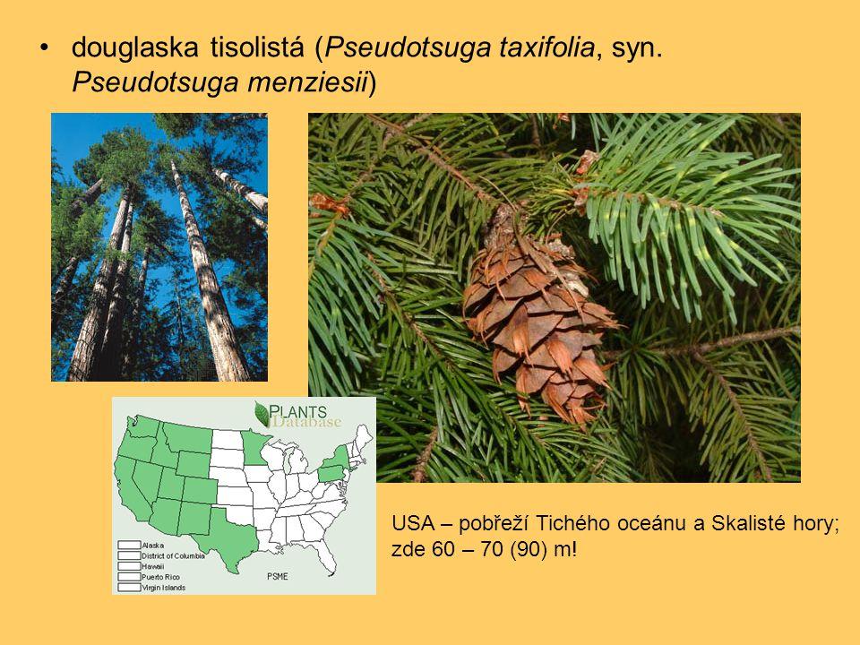 douglaska tisolistá (Pseudotsuga taxifolia, syn. Pseudotsuga menziesii)