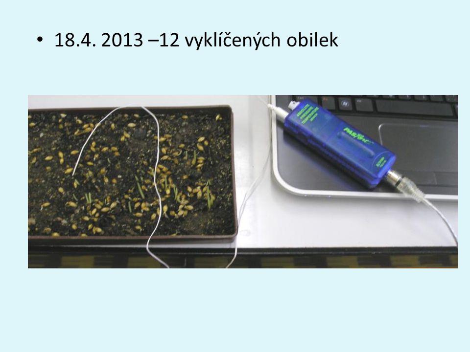 18.4. 2013 –12 vyklíčených obilek