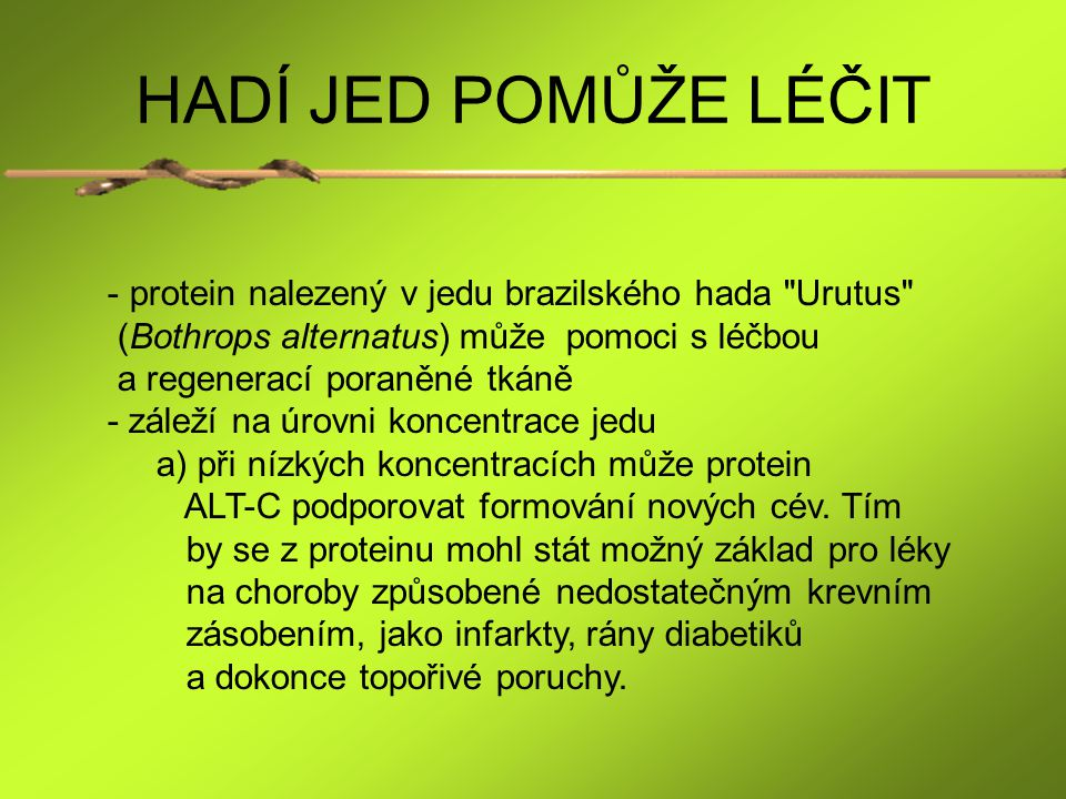 HADÍ JED POMŮŽE LÉČIT protein nalezený v jedu brazilského hada Urutus (Bothrops alternatus) může pomoci s léčbou.