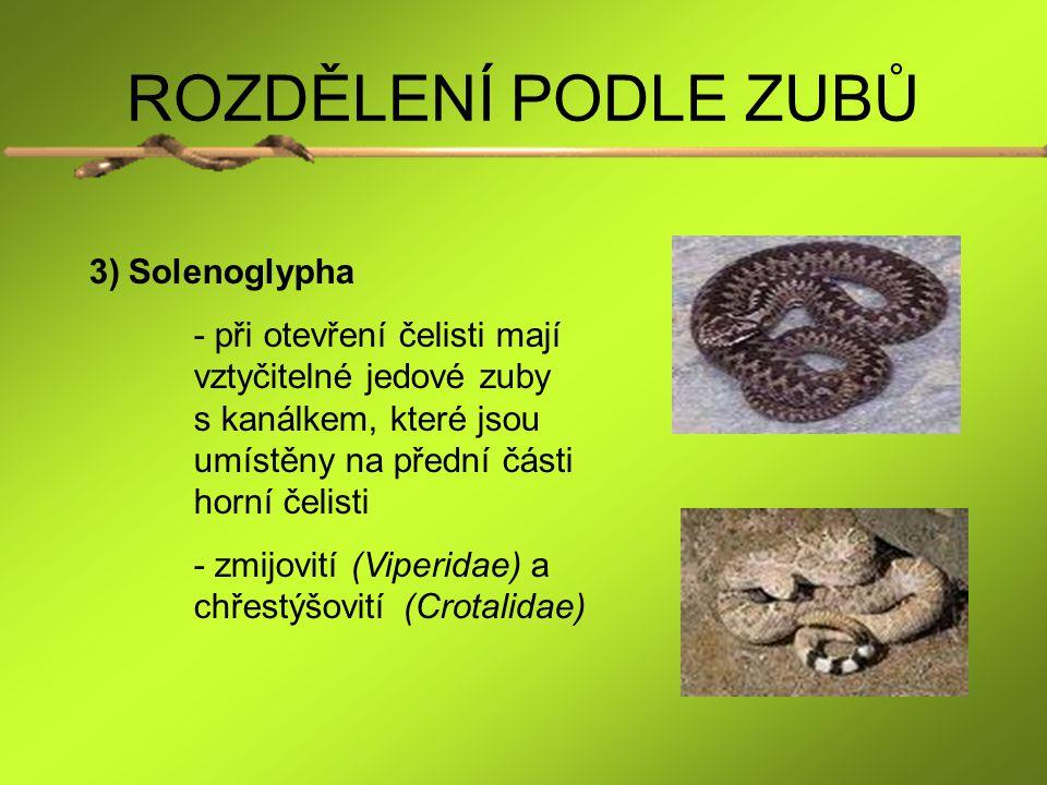 ROZDĚLENÍ PODLE ZUBŮ Solenoglypha