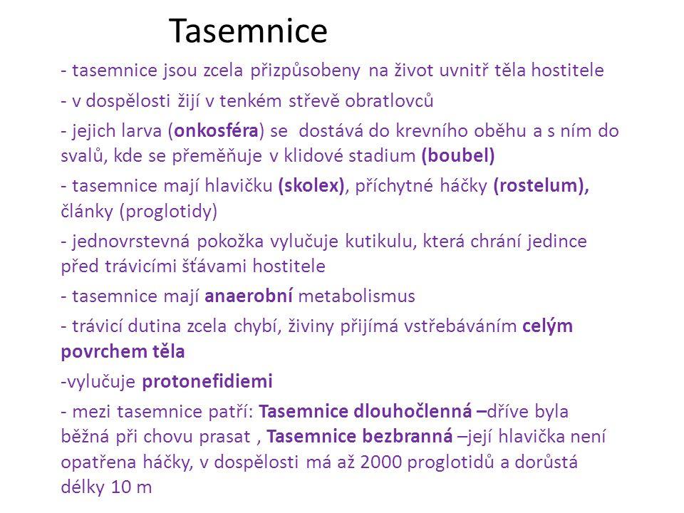 Tasemnice - tasemnice jsou zcela přizpůsobeny na život uvnitř těla hostitele. - v dospělosti žijí v tenkém střevě obratlovců.