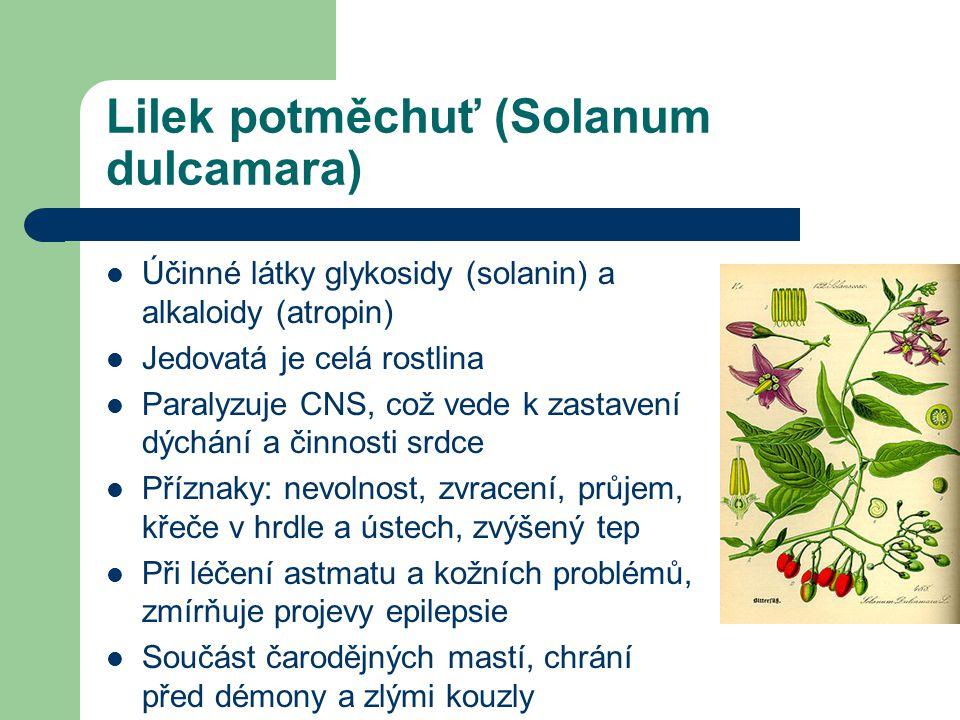 Lilek potměchuť (Solanum dulcamara)