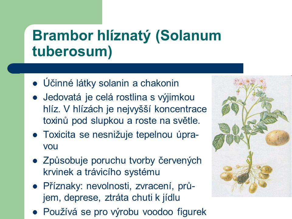 Brambor hlíznatý (Solanum tuberosum)