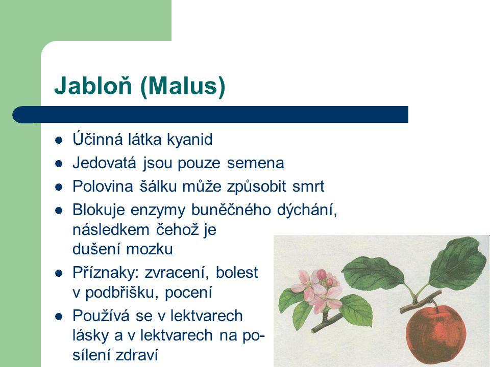 Jabloň (Malus) Účinná látka kyanid Jedovatá jsou pouze semena