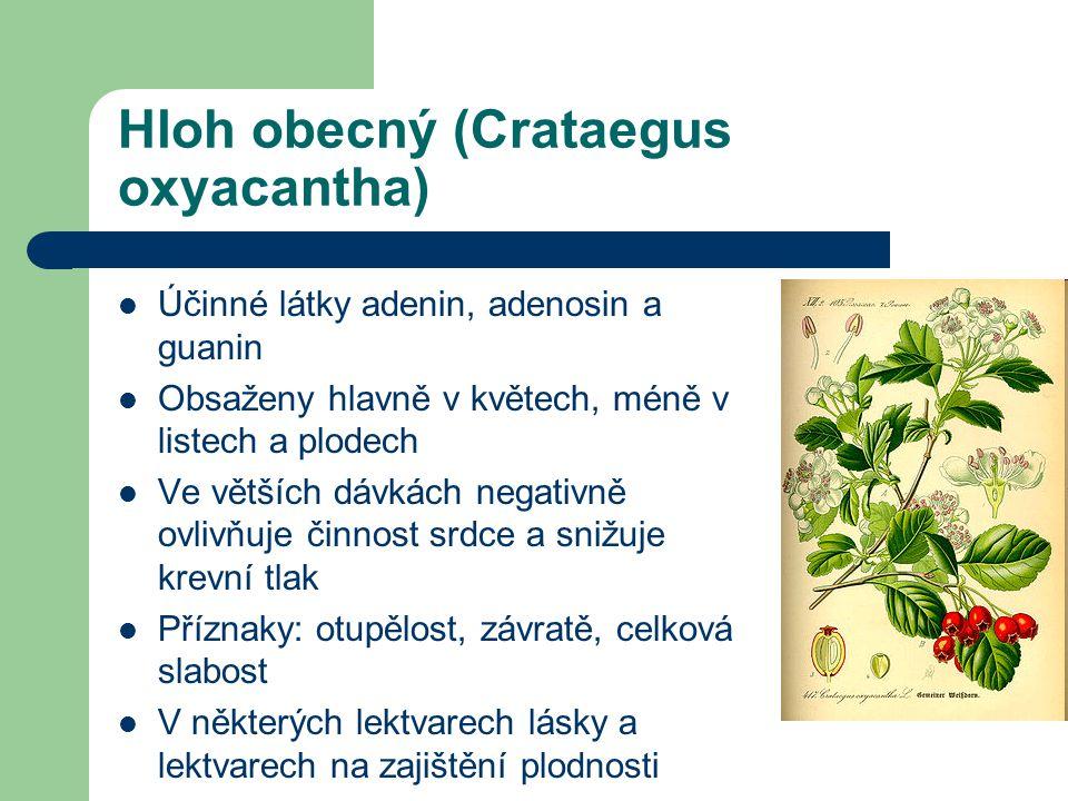 Hloh obecný (Crataegus oxyacantha)