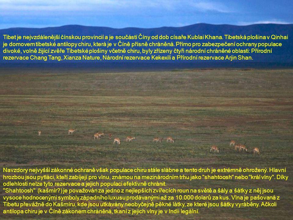 Tibet je nejvzdálenější čínskou provincií a je součástí Číny od dob císaře Kublai Khana. Tibetská plošina v Qinhai je domovem tibetské antilopy chiru, která je v Číně přísně chráněná. Přímo pro zabezpečení ochrany populace divoké, volně žijící zvěře Tibetské plošiny včetně chiru, byly zřízeny čtyři národní chráněné oblasti: Přírodní rezervace Chang Tang, Xianza Nature, Národní rezervace Kekexili a Přírodní rezervace Arjin Shan.