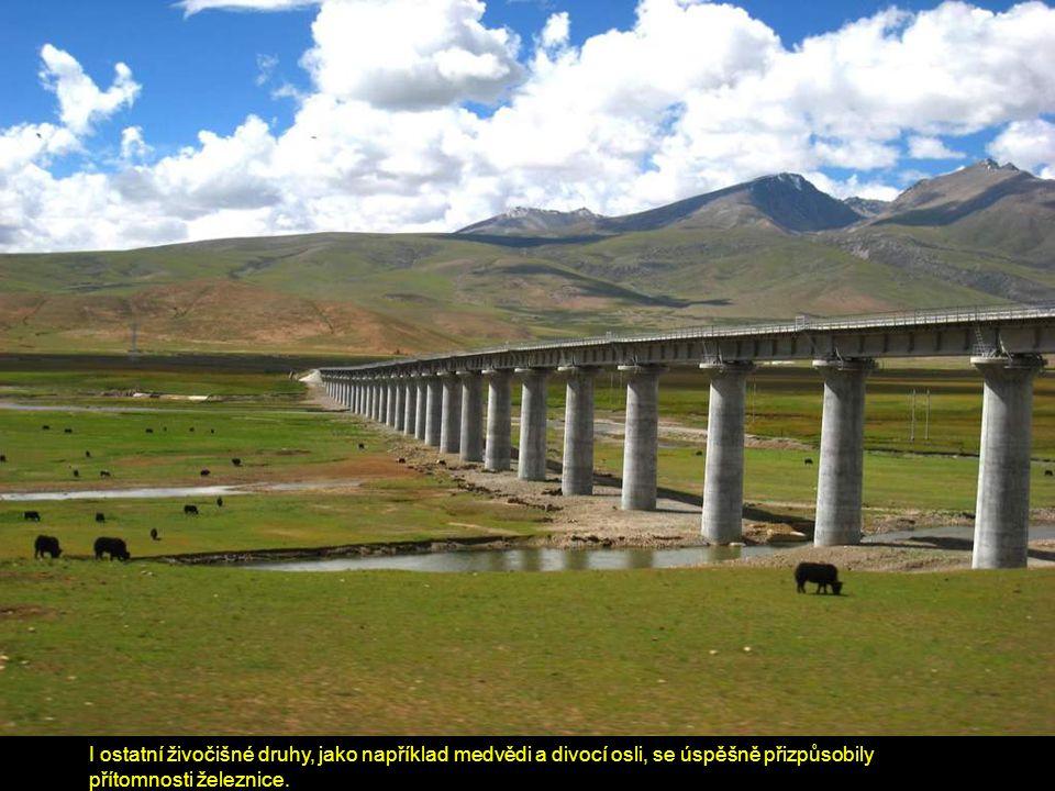 I ostatní živočišné druhy, jako například medvědi a divocí osli, se úspěšně přizpůsobily přítomnosti železnice.