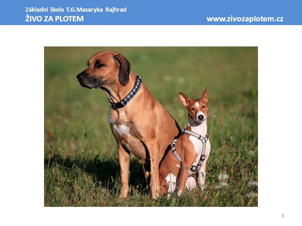 ŽIVO ZA PLOTEM www.zivozaplotem.cz