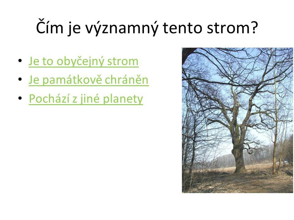 Čím je významný tento strom