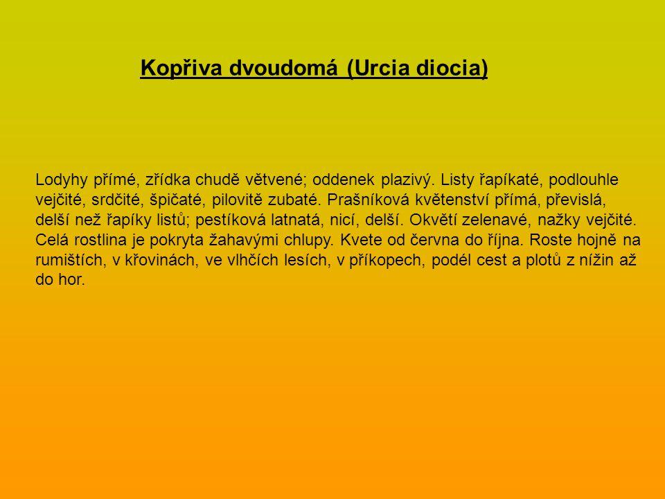Kopřiva dvoudomá (Urcia diocia)