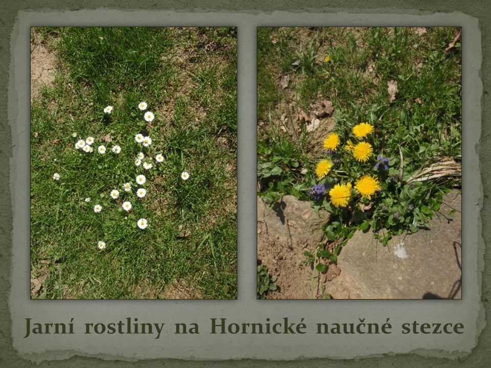 Jarní rostliny na Hornické naučné stezce