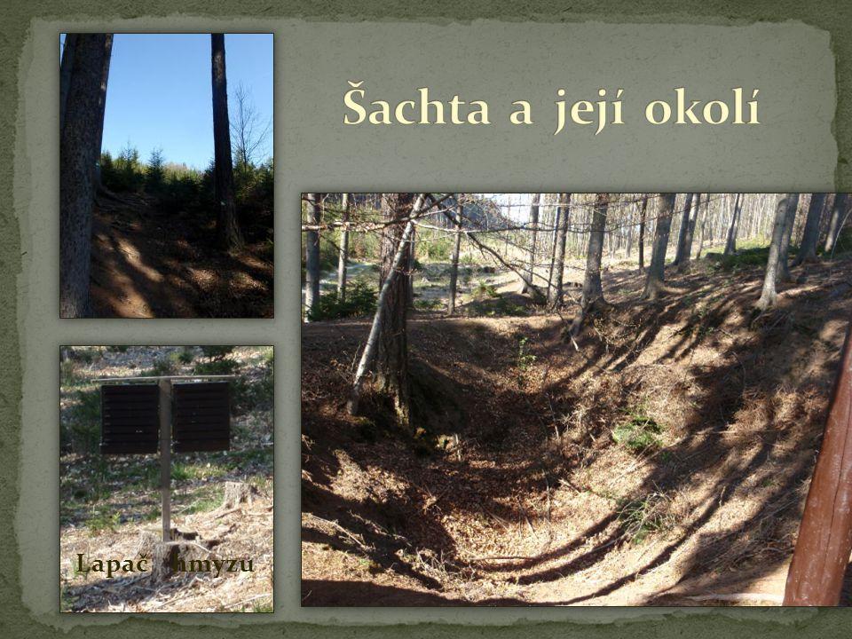 Šachta a její okolí Lapač hmyzu