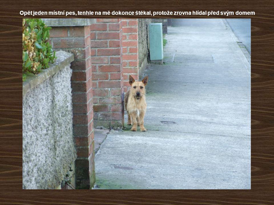 Opět jeden místní pes, tenhle na mě dokonce štěkal, protože zrovna hlídal před svým domem