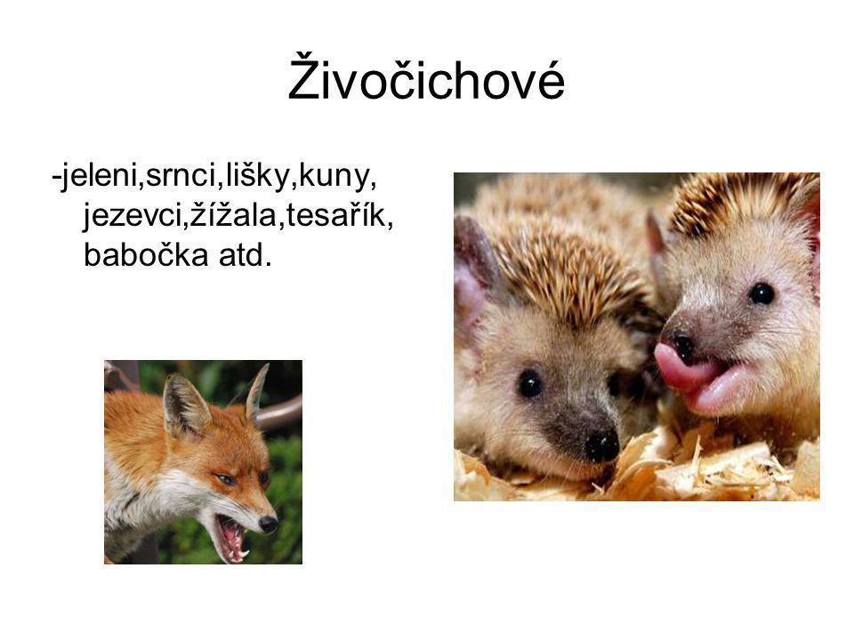 Živočichové -jeleni,srnci,lišky,kuny, jezevci,žížala,tesařík,babočka atd.