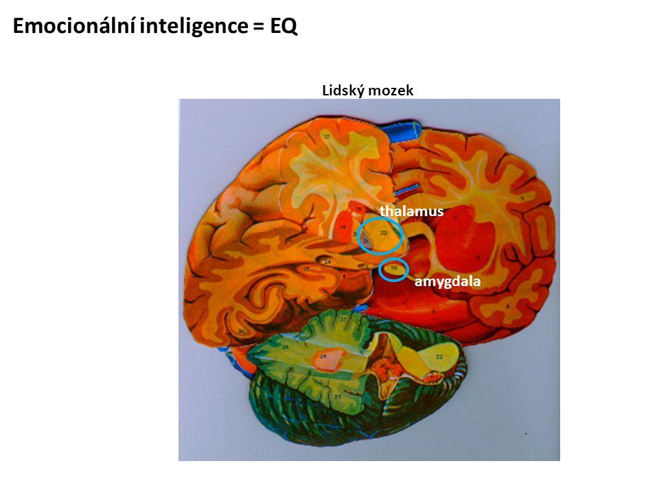 Emocionální inteligence = EQ