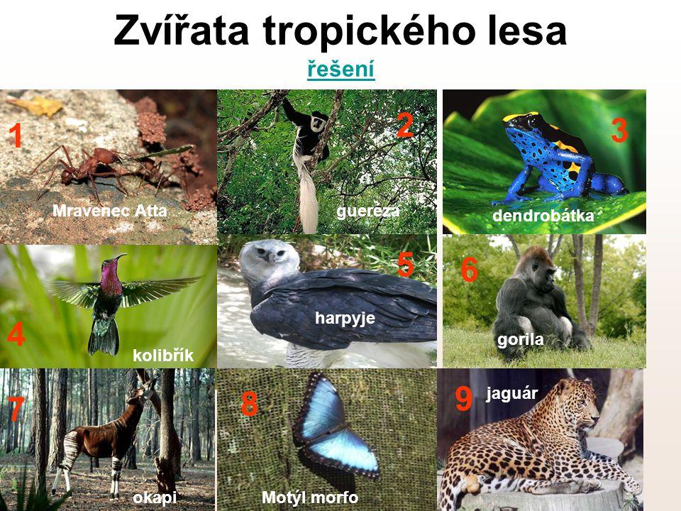 Zvířata tropického lesa řešení
