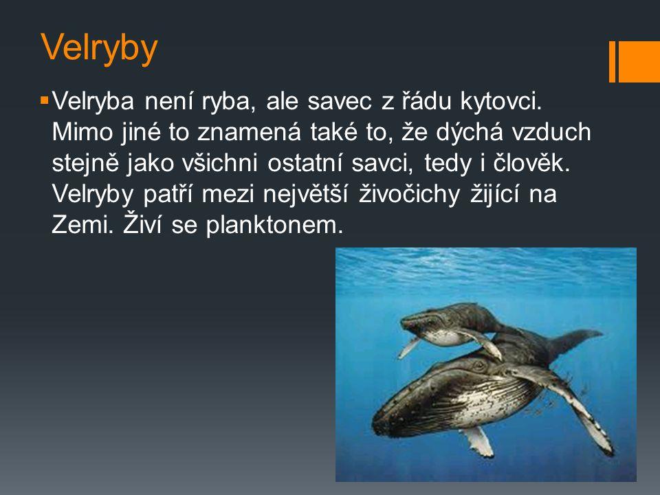 Velryby