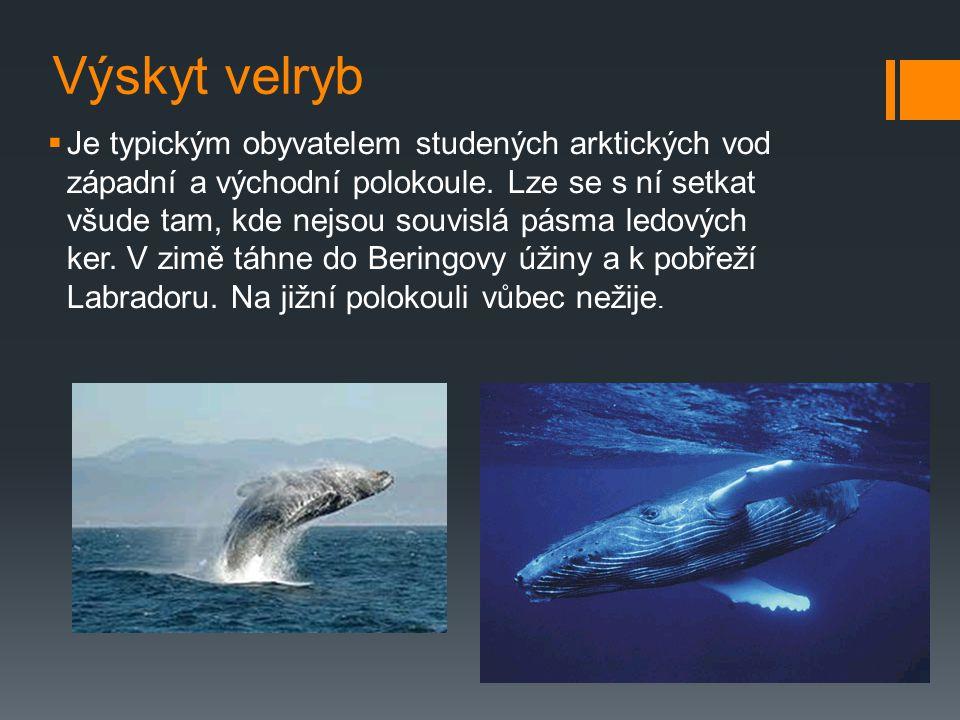 Výskyt velryb