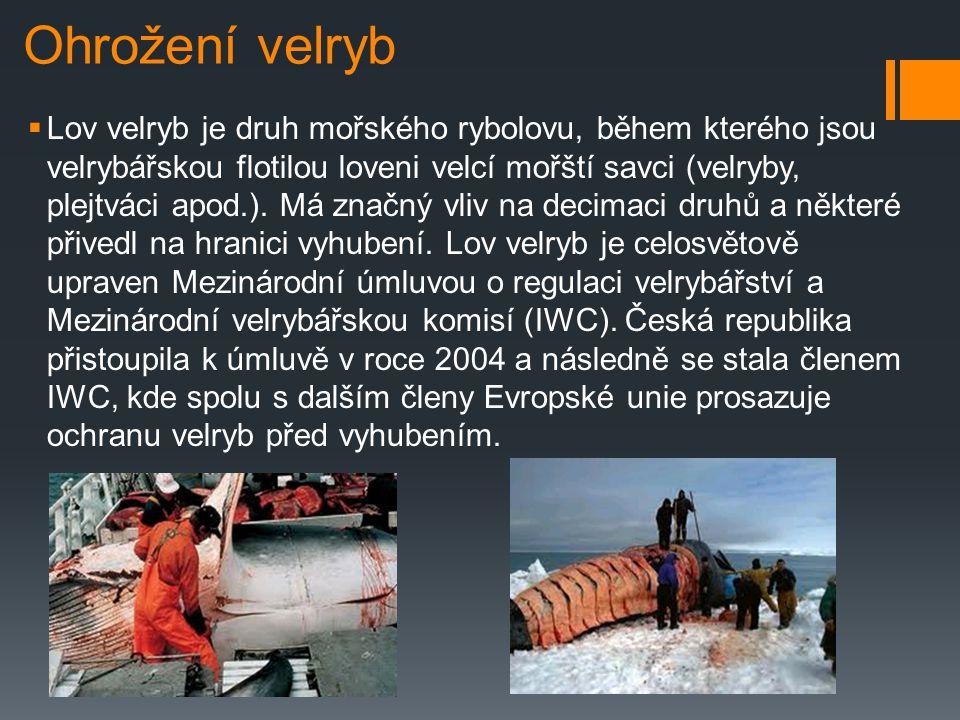 Ohrožení velryb