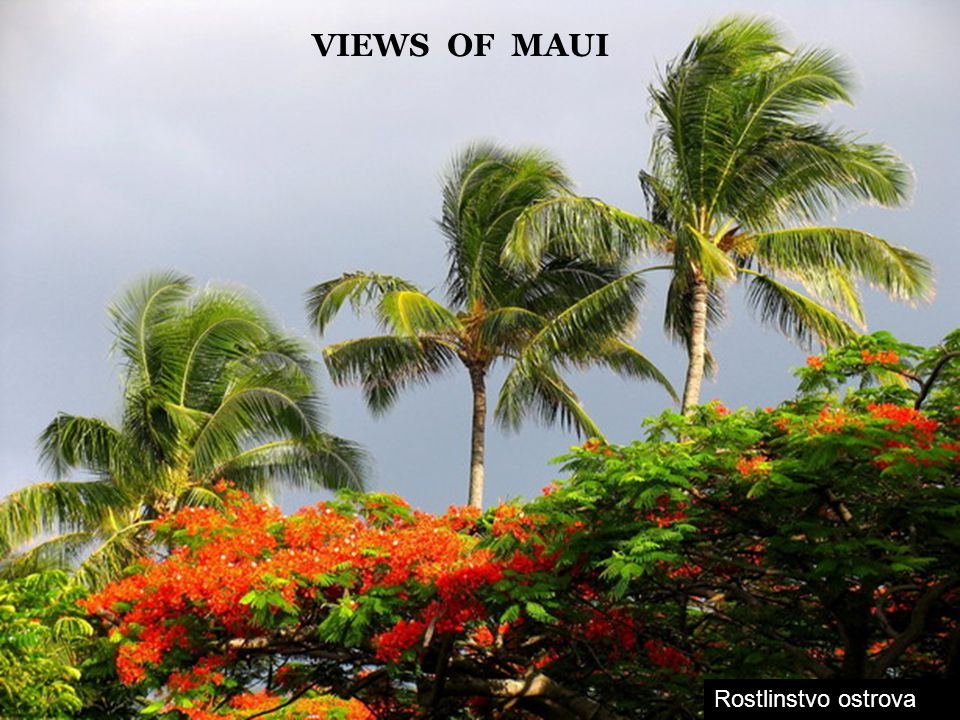 VIEWS OF MAUI Rostlinstvo ostrova