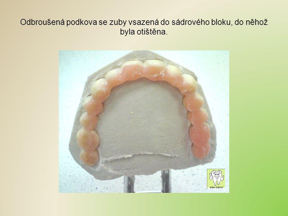 Odbroušená podkova se zuby vsazená do sádrového bloku, do něhož byla otištěna.