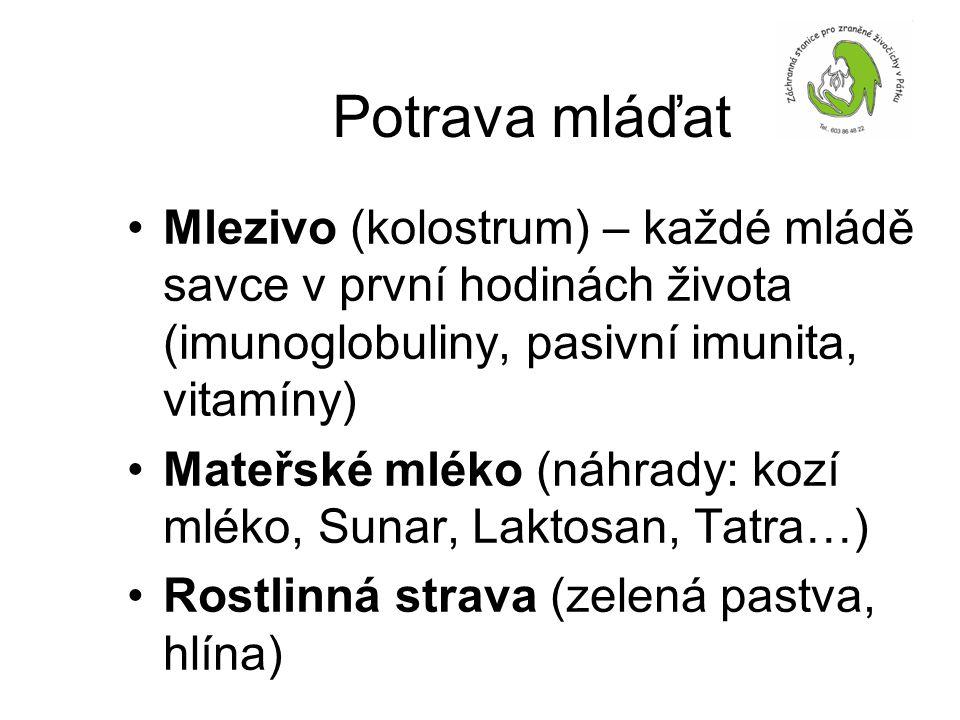 Potrava mláďat Mlezivo (kolostrum) – každé mládě savce v první hodinách života (imunoglobuliny, pasivní imunita, vitamíny)