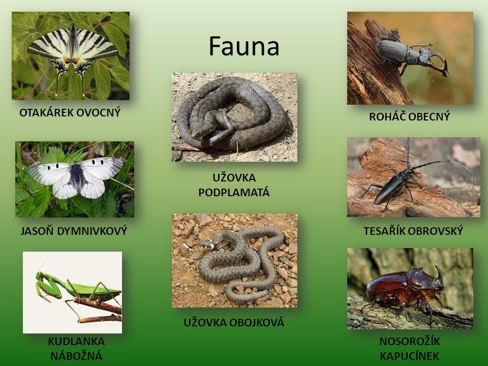 Fauna OTAKÁREK OVOCNÝ ROHÁČ OBECNÝ UŽOVKA PODPLAMATÁ JASOŇ DYMNIVKOVÝ