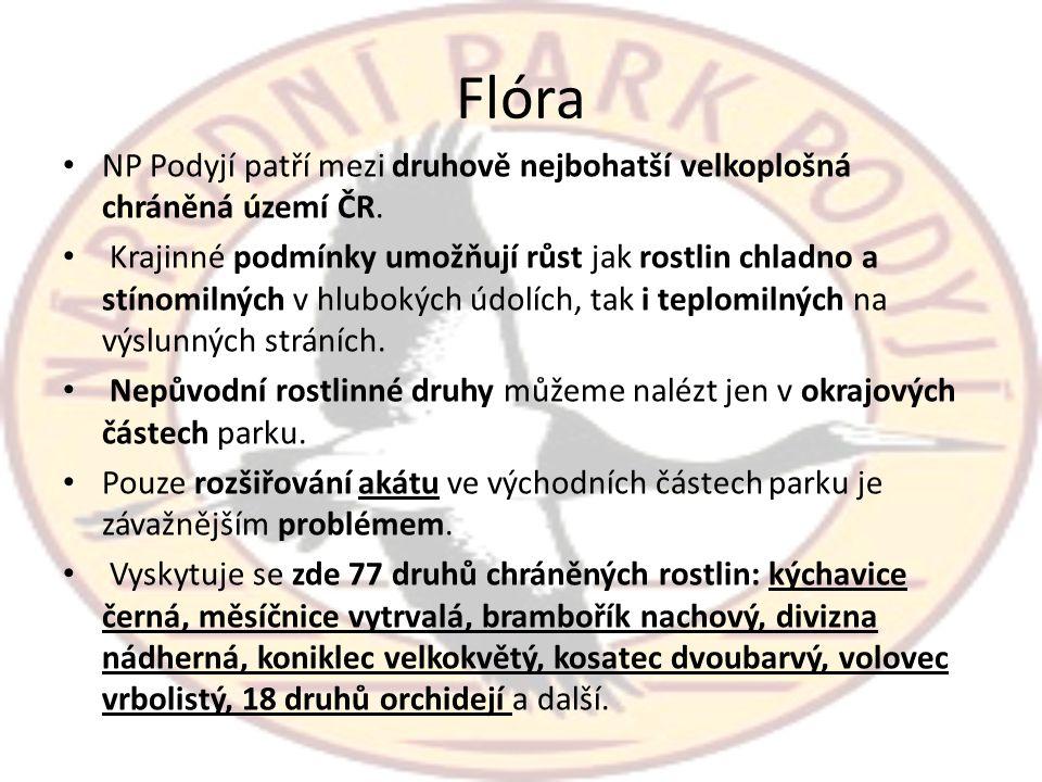 Flóra NP Podyjí patří mezi druhově nejbohatší velkoplošná chráněná území ČR.