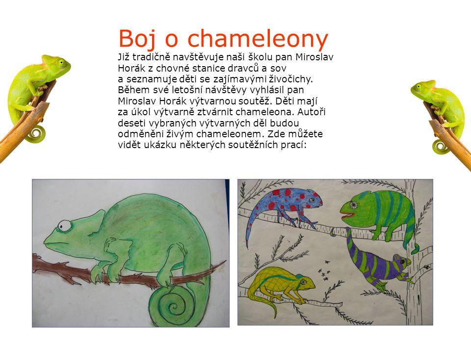 Boj o chameleony Již tradičně navštěvuje naši školu pan Miroslav Horák z chovné stanice dravců a sov.