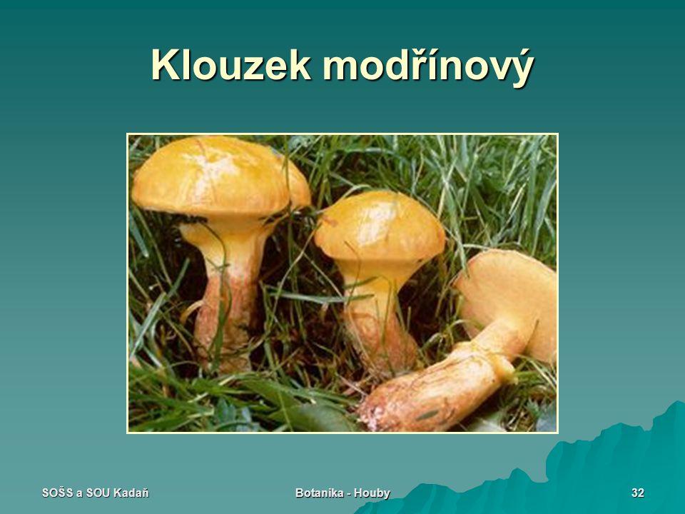 Klouzek modřínový SOŠS a SOU Kadaň Botanika - Houby