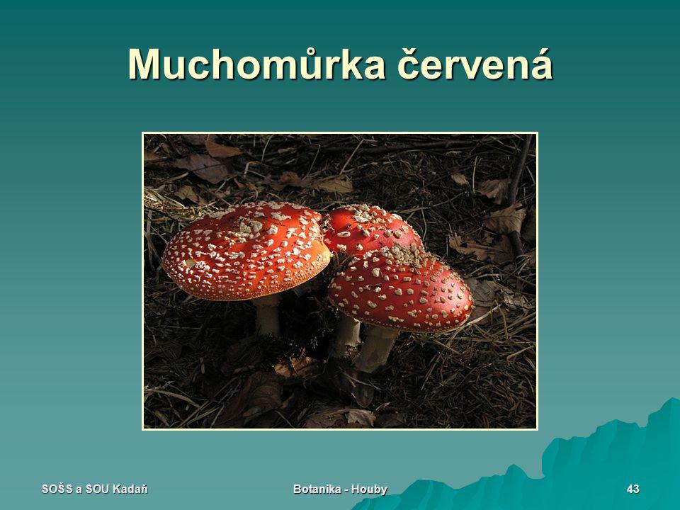 Muchomůrka červená SOŠS a SOU Kadaň Botanika - Houby