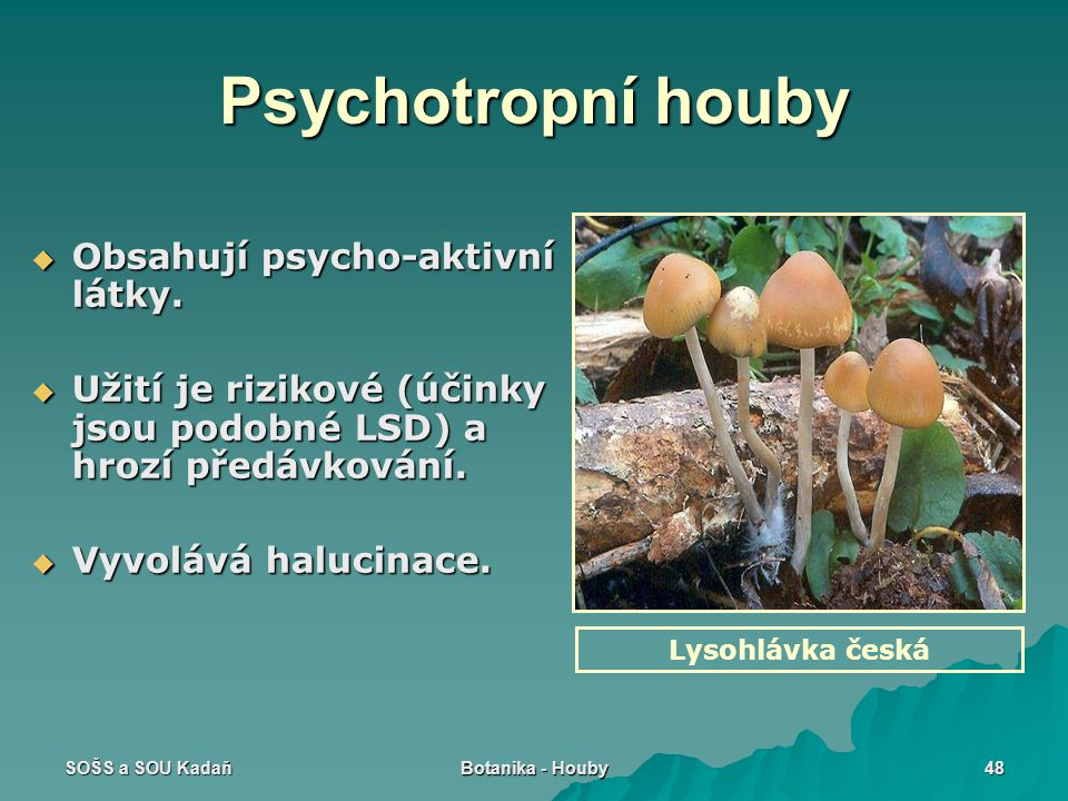 Psychotropní houby Obsahují psycho-aktivní látky.