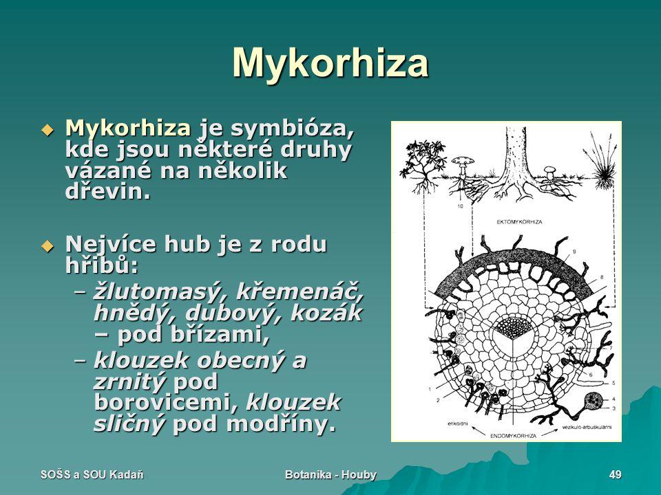 Mykorhiza Mykorhiza je symbióza, kde jsou některé druhy vázané na několik dřevin. Nejvíce hub je z rodu hřibů: